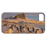 pingüino del adelie, Pygoscelis Adeliae, colonia Funda Para iPhone SE/5/5s