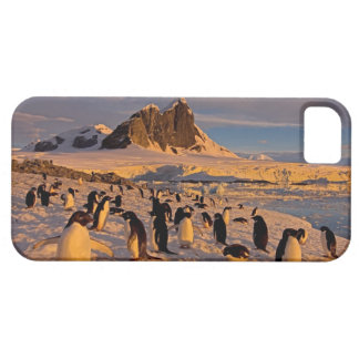 pingüino del adelie, Pygoscelis Adeliae, colonia iPhone 5 Funda