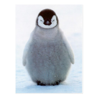 Pingüino del bebé tarjetas postales