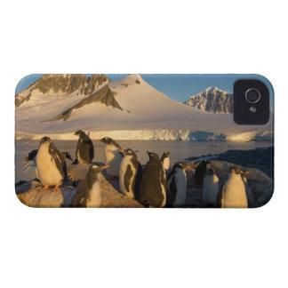 pingüino del gentoo, Pygoscelis Papua, colonia ade iPhone 4 Cárcasa