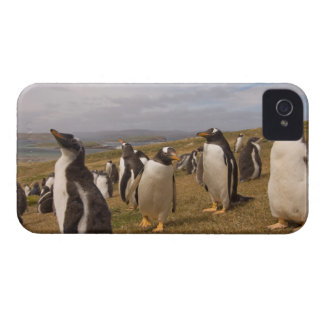 pingüino del gentoo, Pygoscelis Papua, colonia de  Case-Mate iPhone 4 Protectores