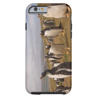 pingüino del gentoo, Pygoscelis Papua, colonia de Funda Para iPhone 6 Tough