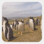 pingüino del gentoo, Pygoscelis Papua, colonia de Pegatina Cuadrada