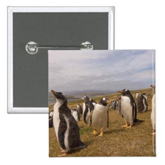 pingüino del gentoo, Pygoscelis Papua, colonia de  Pin Cuadrada 5 Cm