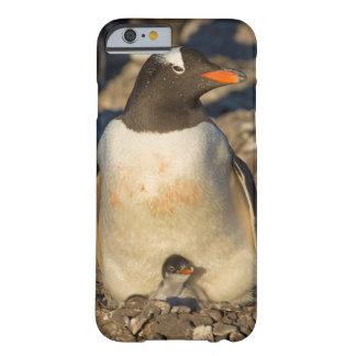 pingüino del gentoo, Pygoscelis Papua, con recién Funda De iPhone 6 Barely There