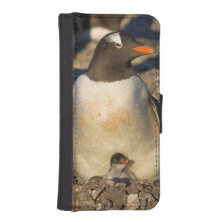 pingüino del gentoo, Pygoscelis Papua, con recién  Carteras Para Teléfono