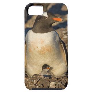 pingüino del gentoo, Pygoscelis Papua, con recién iPhone 5 Carcasa