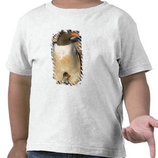 pingüino del gentoo, Pygoscelis Papua, con recién  Camisetas