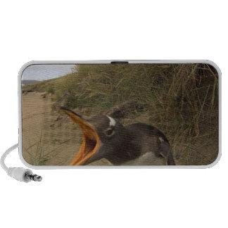 pingüino del gentoo, Pygoscelis Papua, en castor iPod Altavoces