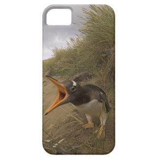 pingüino del gentoo, Pygoscelis Papua, en castor iPhone 5 Cárcasas