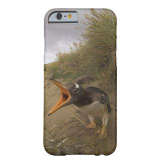 pingüino del gentoo, Pygoscelis Papua, en castor Funda De iPhone 6 Barely There