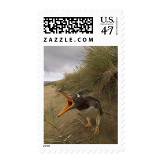pingüino del gentoo, Pygoscelis Papua, en castor Sello Postal