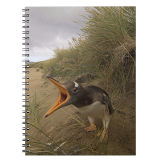 pingüino del gentoo, Pygoscelis Papua, en castor Spiral Notebooks