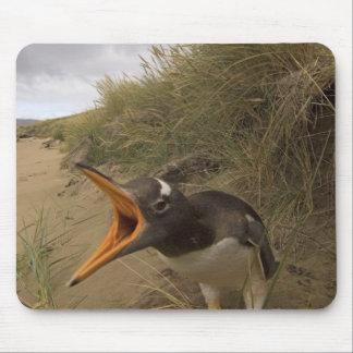 pingüino del gentoo, Pygoscelis Papua, en castor Alfombrillas De Raton