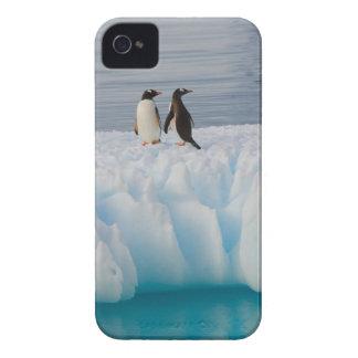 pingüino del gentoo, Pygoscelis Papua, en el hielo iPhone 4 Carcasas
