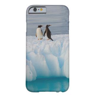 pingüino del gentoo, Pygoscelis Papua, en el hielo Funda Para iPhone 6 Barely There