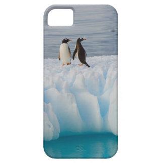 pingüino del gentoo, Pygoscelis Papua, en el hielo iPhone 5 Fundas