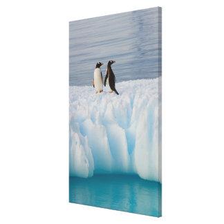 pingüino del gentoo Pygoscelis Papua en el hielo Lona Estirada Galerías