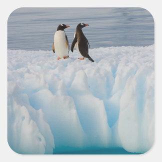 pingüino del gentoo, Pygoscelis Papua, en el hielo Colcomanias Cuadradass