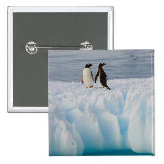 pingüino del gentoo, Pygoscelis Papua, en el hielo Pin Cuadrada 5 Cm