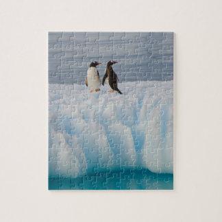 pingüino del gentoo, Pygoscelis Papua, en el hielo Puzzle