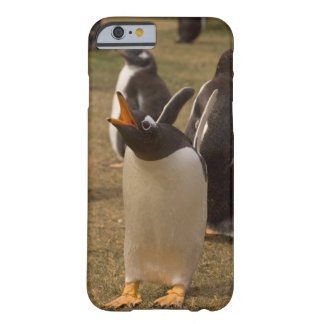 pingüino del gentoo, Pygoscelis Papua, llamando, Funda De iPhone 6 Barely There