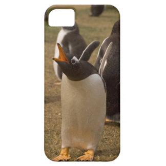 pingüino del gentoo, Pygoscelis Papua, llamando, iPhone 5 Carcasa