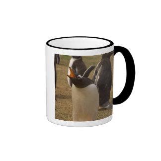 pingüino del gentoo, Pygoscelis Papua, llamando, Taza De Dos Colores
