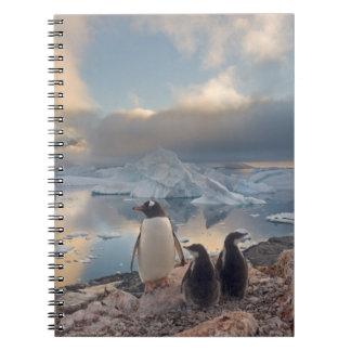 pingüino del gentoo, Pygoscelis Papua, padre con 2 Libros De Apuntes Con Espiral