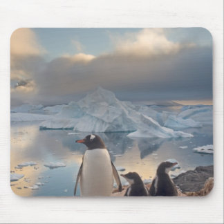 pingüino del gentoo, Pygoscelis Papua, padre con 2 Tapete De Raton