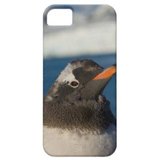 pingüino del gentoo, Pygoscelis Papua, polluelo ad iPhone 5 Case-Mate Protector