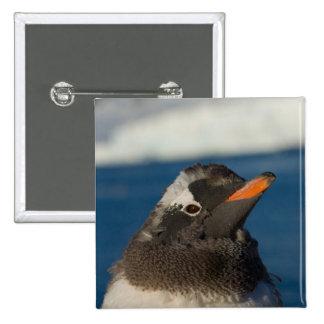 pingüino del gentoo, Pygoscelis Papua, polluelo ad Pin Cuadrada 5 Cm