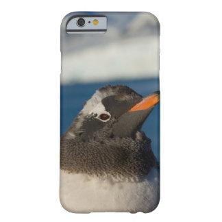 pingüino del gentoo, Pygoscelis Papua, polluelo Funda De iPhone 6 Barely There