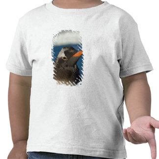 pingüino del gentoo, Pygoscelis Papua, polluelo Camisetas