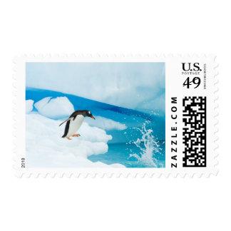 pingüino del gentoo, Pygoscelis Papua, saltando de Sello