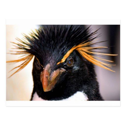 pingüino del rockhopper tarjetas postales