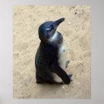 Pingüino en la arena posters