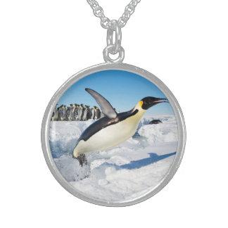 Pingüino en saltar de la Antártida del agua Collar De Plata Esterlina
