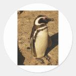 Pingüino Etiqueta Redonda