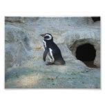 Pingüino Fotografia