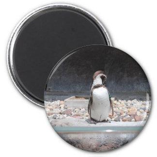 Pingüino Imán Para Frigorifico