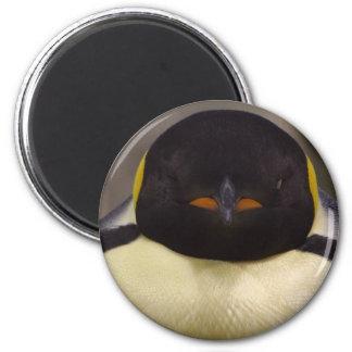 Pingüino Iman Para Frigorífico
