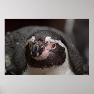 Pingüino Impresiones