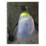 Pingüino Libretas
