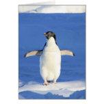 Pingüino lindo felicitaciones