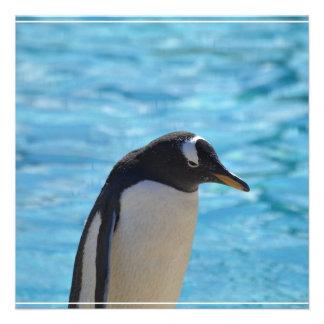 Pingüino lindo comunicados personalizados