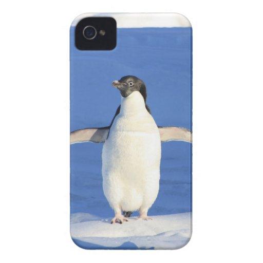 Pingüino lindo iPhone 4 carcasas