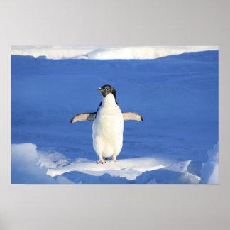 Pingüino lindo póster