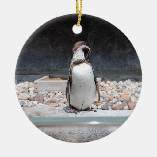 Pingüino Ornato