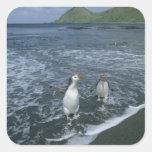 Pingüino real, (schlegeli del Eudyptes), volviendo Pegatina Cuadrada